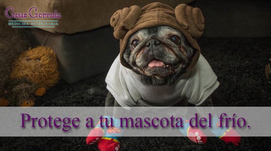 protege-a-tu-mascota-del-frio-medicina-veterinaria-gous-pamplona