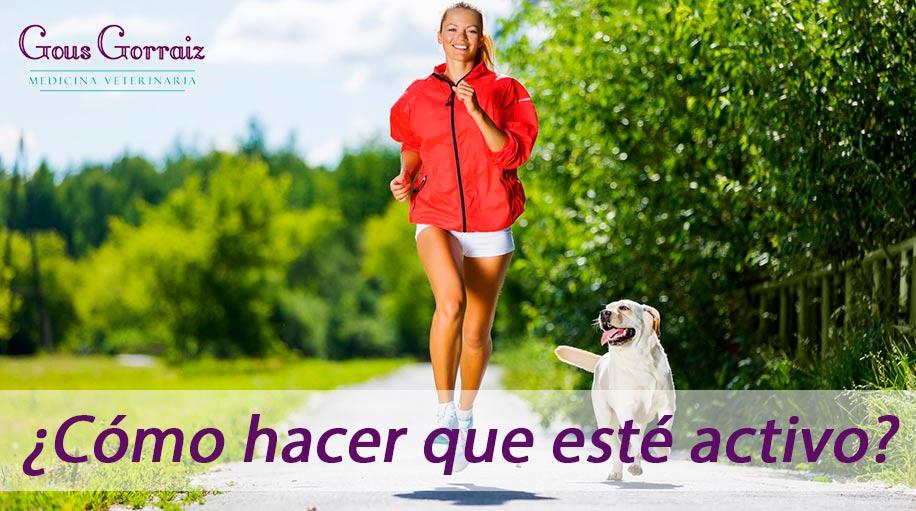 Ejercicios para que tu perro esté activo