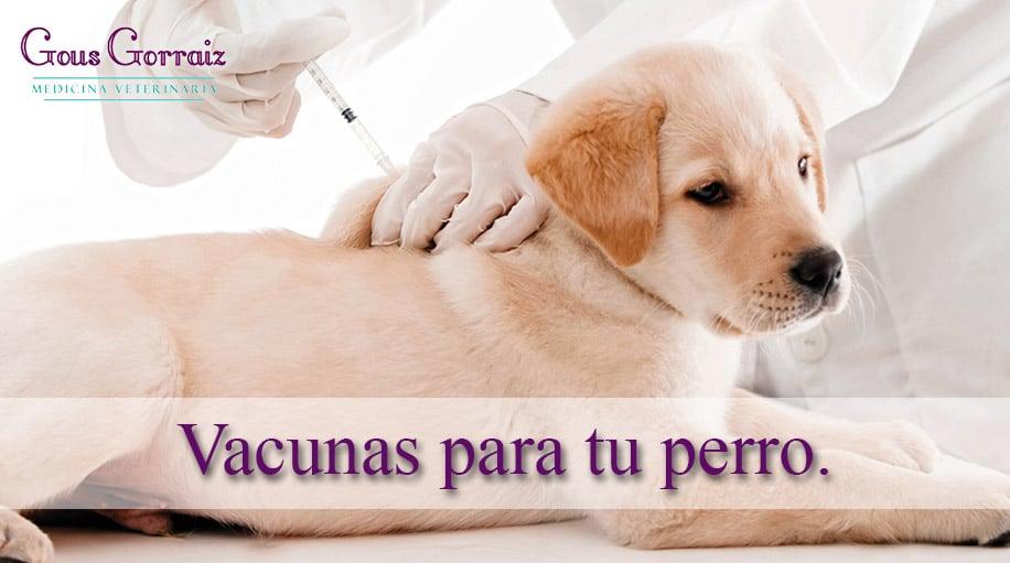 ¿Qué vacunas necesita tu perro y para que sirven?