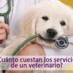 clinica-veterinaria-gous-precio