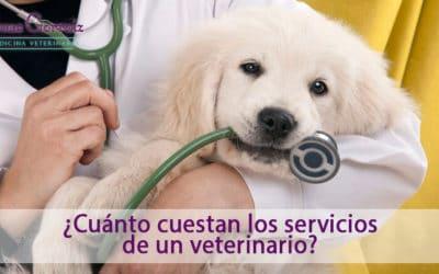 Cuánto cuestan los servicios de un veterinario en Pamplona en 2021