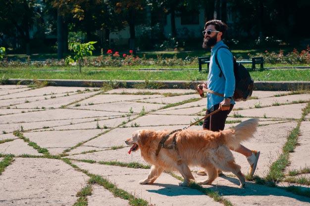 Sacar a pasear a tu mascota en tiempos de coronavirus