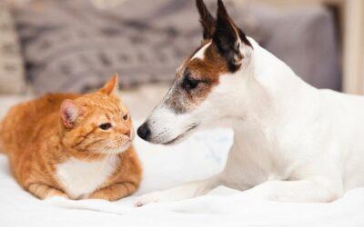 Las emergencias más comunes en mascotas y animales pequeños