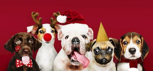 Ideas de regalos de Navidad para mascotas