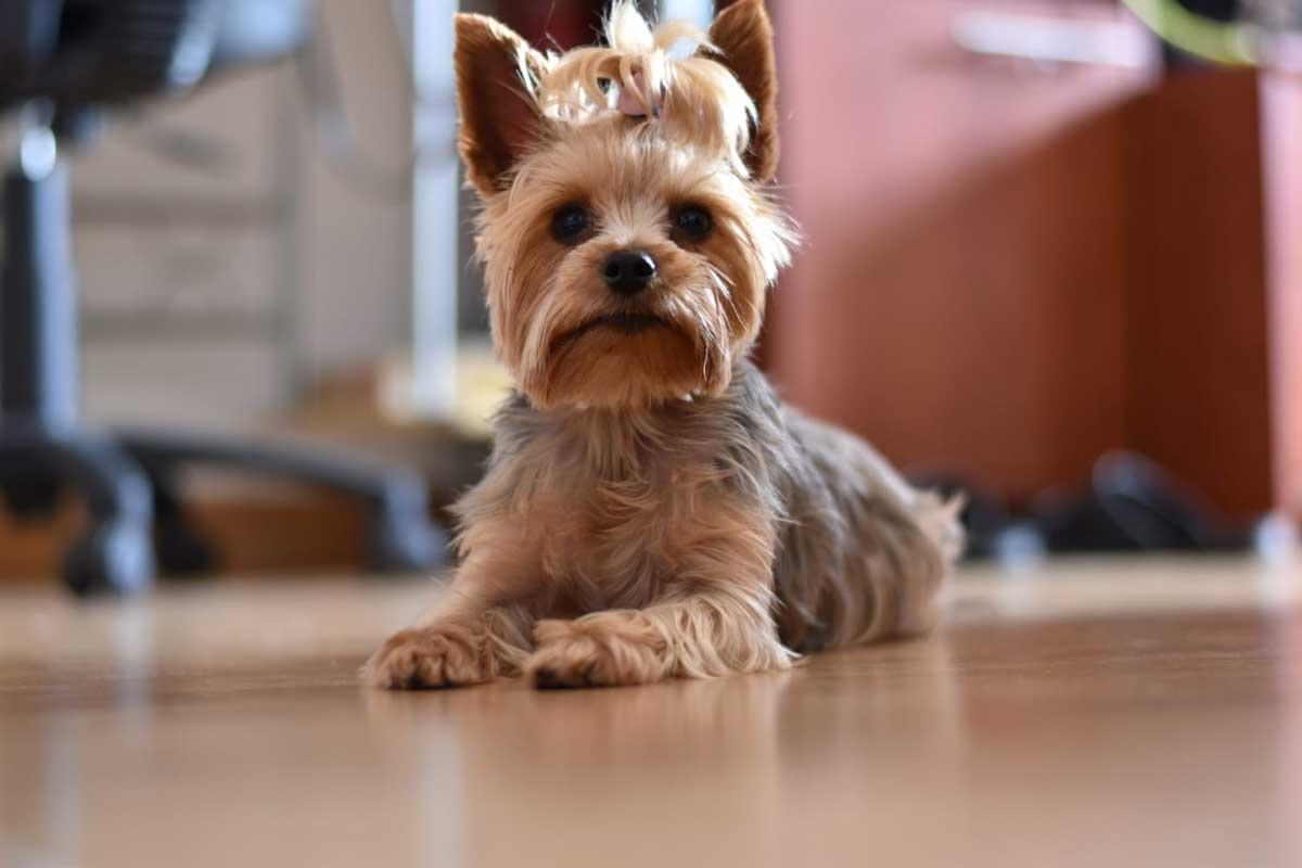 clinica veterinaria en pamplona testimonio sandra