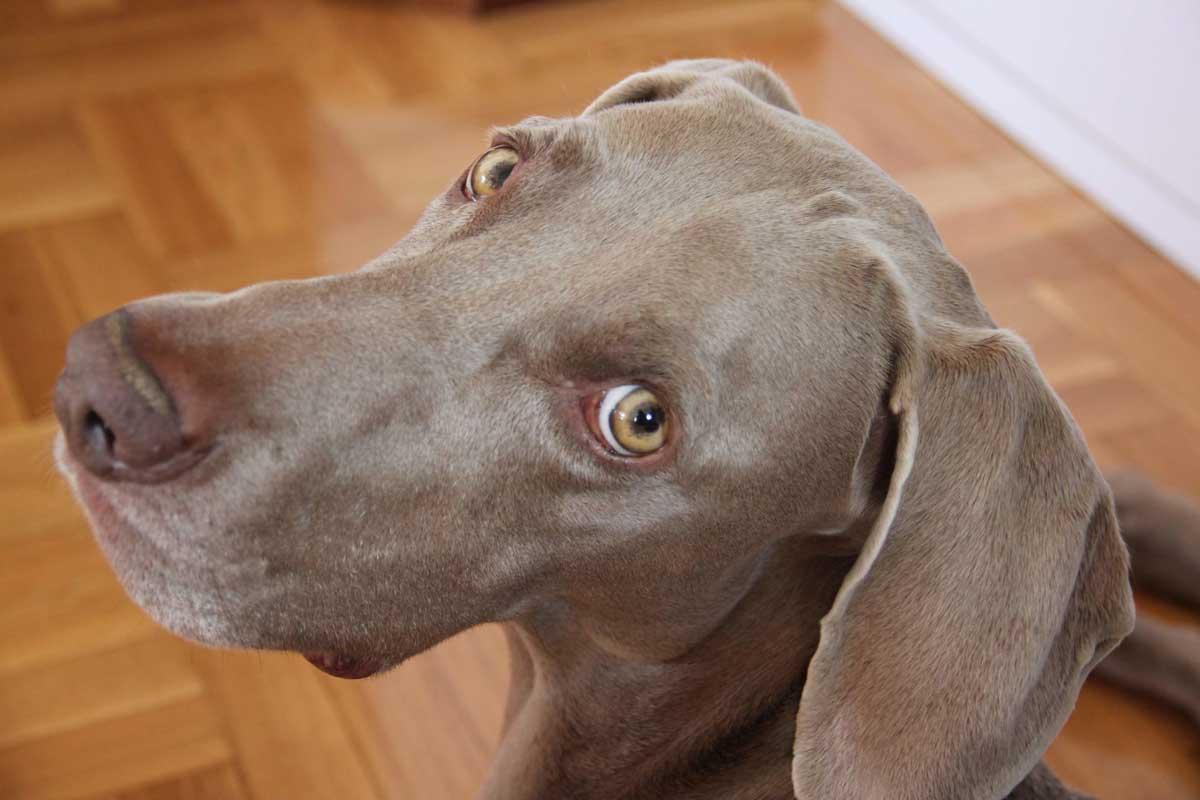 clinicas veterinarias pamplona testimonio toto