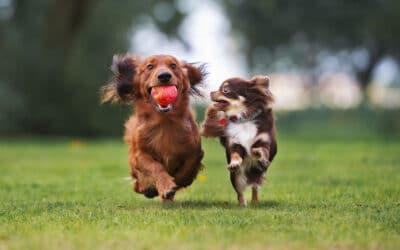 Zonas de esparcimiento canino en Pamplona: dónde están