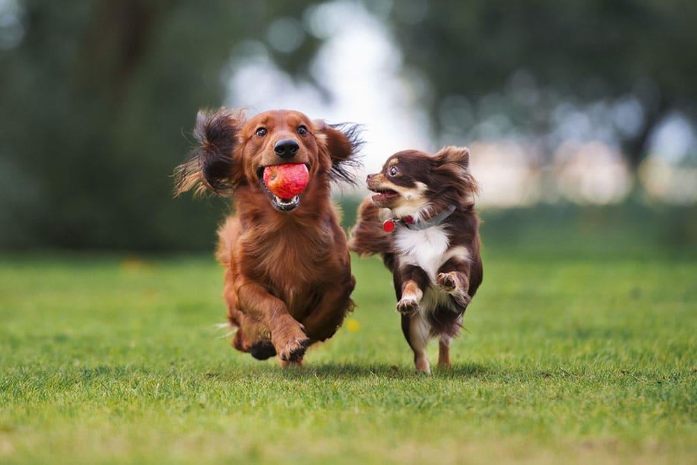 zonas esparcimiento canino