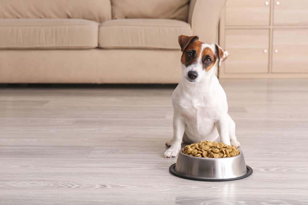 elegir la comida para perros
